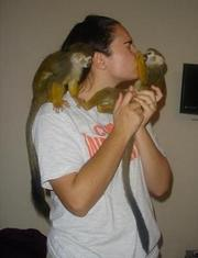 Gorgeous baby Capuchin Monkeys For Adoption